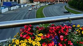Blumen über Autobahn